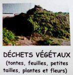 Déchets_végétaux
